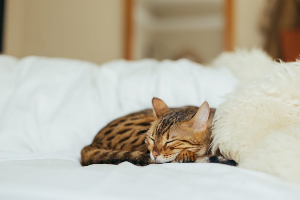 cat-napping-photo